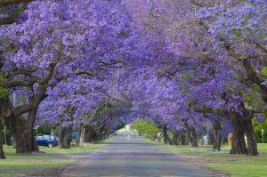 #6 Grafton, Nsw Australia