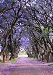#8 Cullinan, South Africa