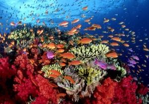 corales1