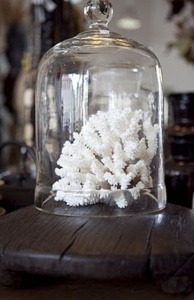 decorating-with-sea-corals-stylish-ideas-15