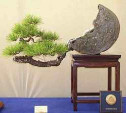 bonsai-ideas-decoracion-interiores-Interior-design-bonsai-ornaments-4